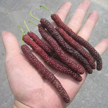 200 pcs/bag long mulberry seed, rare mulberry tree, Exotic plant Pakistan fruit seeds,Large super sweet Non-GMO food for garden(China)
