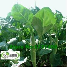 20 gram/original pack Early maturing varieties, Chinese kale seeds bonsai plant DIY home garden free shipping#007