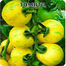 Gold Color Face Color Tomato Seeds 200 Pcs Hot Organic Vegetable Seeds(China)