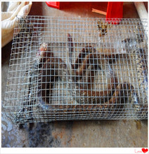Best Sell High Quality  Snake trap/cobra trap/rattlesnake trap/rattlesnake cage/fron Ancient China Civilization