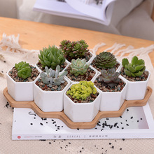 10pcs/set Modern Hexagon Flowerpot White Ceramic Succulent Plant Pot with Bamboo Stand Bonsai Planter Garden Supply Home Decor