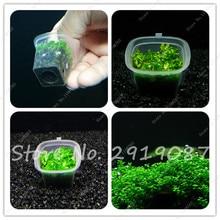 Как сажать аквариумные растения из семян 77