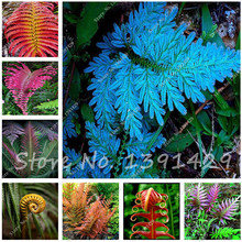 100pcs 24 kinds Garden Fern Seeds Rare Creeper Vines Grass Mixed Foliage Plants Bonsai Exotic Plant for Flower Pots Planters