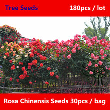 Novel Plant Rosa Chinensis Seeds 180pcs, Bright Colored & Rich Aroma Chinese Rose Yueji Seeds, Ornamental Plant China Rose Seeds