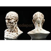 "4"" Human Model Anatomy Skull Head Muscle Bone Artist Drawing Antique White/ Yellow"