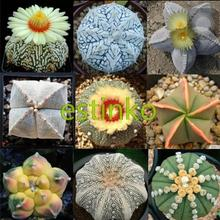 Hot Selling 20pcs/lot Mixed Astrophytum Cactus Seeds Succulents Plants Bonsai Seeds DIY Home Garden Potted Plant Flower