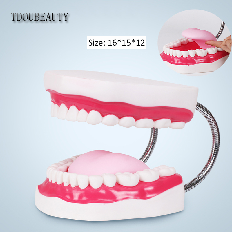 TDOUBEAUTY Six Times Magnification Full Mouth Model Tooth Teaching Model Dental the High-grade Presentation Free Shipping<br>