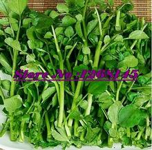 "200 Salad Seeds Cress ""Watercress"" Common / Plain nutrition NON GMO Vegetable seeds DIY Home Garden Plants"