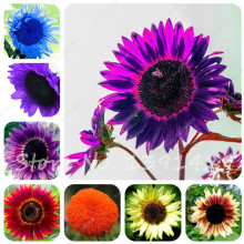 40 pcs/bag Giant Sunflower Seeds Bonsai Flower Seeds Sunflower Russian Sunflower Seeds For Home Garden Planting(China)