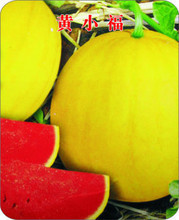 Huangxiao Fu small yellow watermelon seed 10seeds healthy vegetable seeds