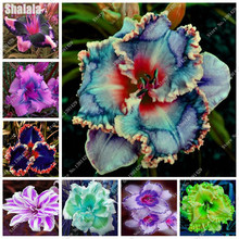 Multi Color Heirloom Hybrid Flower Daylily Seeds Diy Home Garden Bonsai Plant Courtyard & Patio Terrace Building 40 Pcs