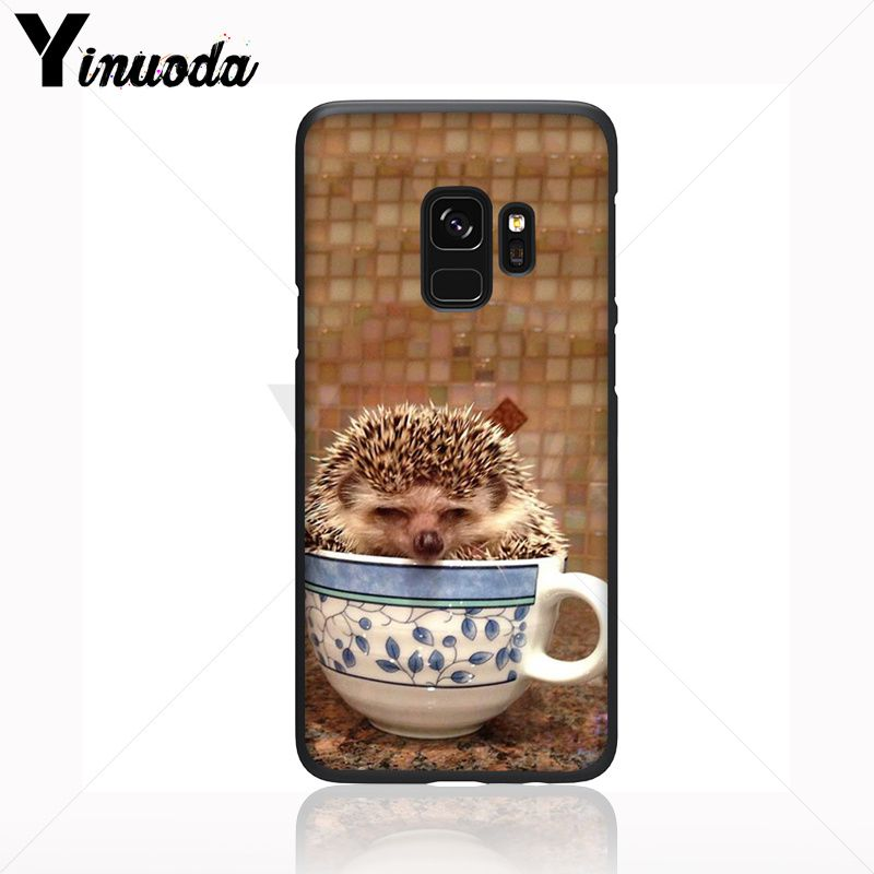 Hedgehog ride a bike Cute in Teacup Animal Art
