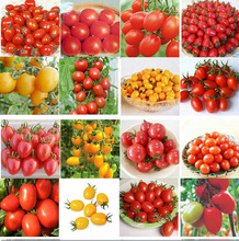200pcs 24 KINDS Tomato Seeds mixed packed Purple Black Red Yellow Green Cherry Peach Pear Tomato Seed Organic Food for Garden