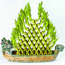 New Fresh Seeds DIY a Bamboo House Good Luck Bamboo Seeds ,Dracaena Seeds Potted Also Known As Prosperous Tower - 100 PCS/Pack,#(China)