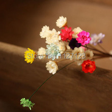 Free shippin!!! 100pcs   Mix colour Dried flowers, wild chrysanthemum flower, Daisy, the glass, filler