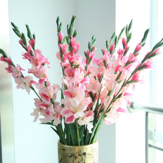 Flower plants. 5PC pale pink gladiolus bulbs (not gladiolus seeds) balcony Exclusive bonsai(China (Mainland))