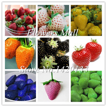 Potted Plants Delicious Multi-color Strawberry seeds 400PCS Black Blue White Strawberries Fruit Seeds Home & Garden True Variety(China)
