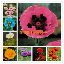 300seeds/pack Oriental Poppy Flowers Seeds, Flower Seeds Potted Flowers Hardy Varieties Of Seed Balcony Flower Pots Planters
