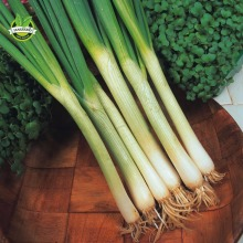 Vegetable - Spring Onion - White Lisbon - 800 Seeds in  Pack Ideal Cooking Vegetale  Big Promotion Free Shipping