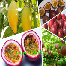 Garden Supplies 100 Pcs Exotic Passion Fruit Seeds Purple Passiflora edulis Passion Flower(China)