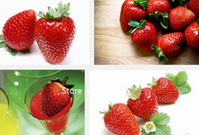 Garden Plant 100 pieces Super big Red Strawberry Seeds, strawberry growing pots Harvest Organic Fruit Seeds, perfume home & gard