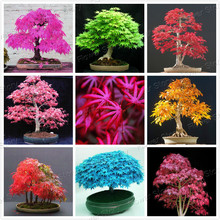 8 Kinds Japanese Maple Bonsai Tree Seeds Garden Plants  for home 20 Pcs each kind