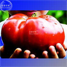 BELLFARM Heirloom Giant Monster Tomato Genuine Fresh Seeds, Professional Pack, 100 Seeds / Pack, Very Rare Vegetables TS177