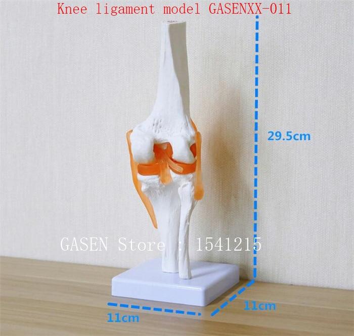 Knee model orthopedics teaching Can be active Knee bone Knee ligament model GASENXX-011<br>