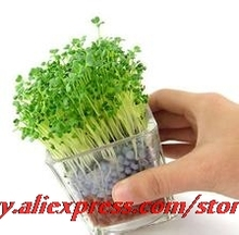 20seeds/bag Special Tao Tanqiu negative ion planting 2 generation of heart grass seed creative office mini plant Free shipping