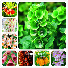 Genuine! 100 Seeds A Lot Fritillaria foxglove Digitalis potted bonsai garden seeds DIY home garden(China)