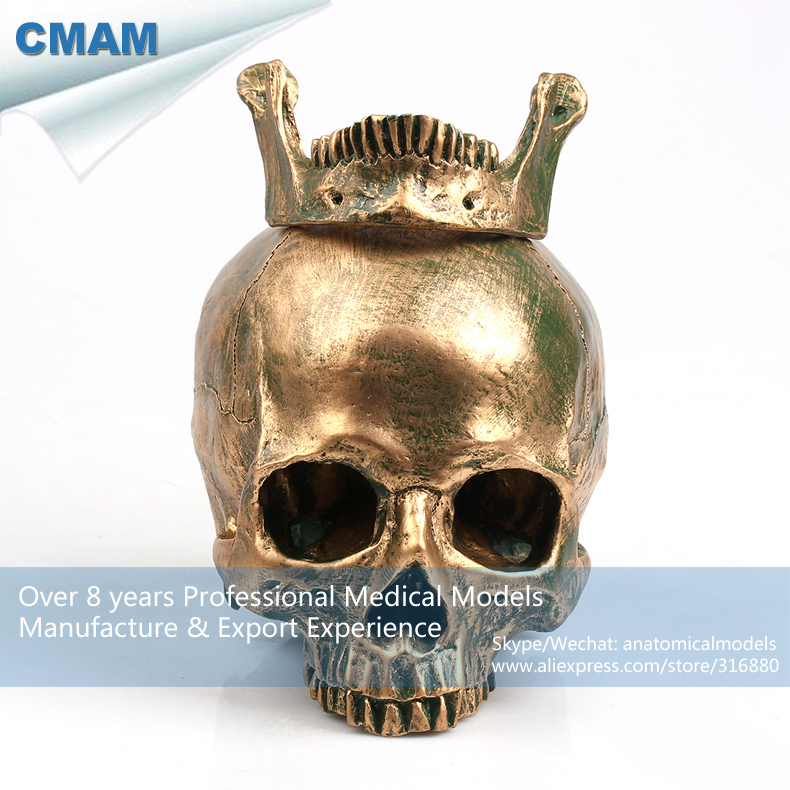 CMAM-PRC56 Antiqued Bronze Colored Life Size Human Skull Anatomy Model for Dec<br><br>Aliexpress