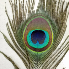 50pcs/lot beautiful natural peacock tail feathers about 10-12inch/25-30cm for DIY decoration