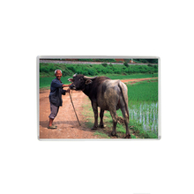 Magnet Sticker, Quality Fridge Magnet, An Old Farmer and His Buffalo, Chinese Souvenir