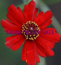50+seeds/pack Coreopsis Ruby Red Dwarf re-seeding Annual Flower Seeds Garden Bonsai