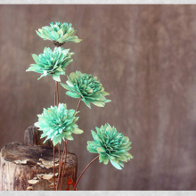 One Piece Green Chinese Rose Natural Dried Plant Handmade Dried Flower Combination With Malleable Iron As Rod Shooting Props(China)