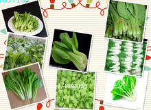 Big sale 100seeds/bag autumn precocious Chinese cabbage seeds vegetable seeds than the Heat Chinese Academy of Agricultural Scie