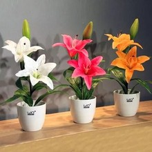 lily flower seed plants seeds 10 seeds
