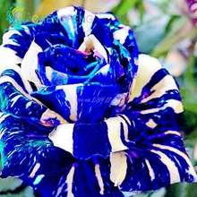 3pcs/bag Desert Rose Seeds Blue With White Side Garden Home Bonsai Balcony Flower Adenium Obesum Seeds Diy Plant Semillas(China)