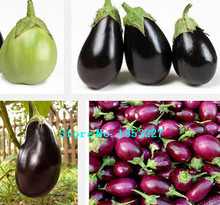 Egg eggplant seeds, such as egg white, fun to watch eggplant seeds - 100 Seed particles vegetable seeds