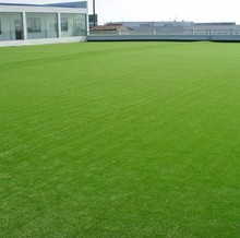 1500pcs High Quality China Lawn grass seed Grass seeds Free Shipping