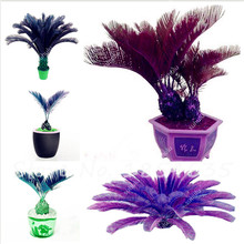 5 Pcs/bag Sago Palm Tree Seeds Cycad Bonsai Tree Seed for Indoor Plant Seeds Easy to Grow Purify the Air(China)