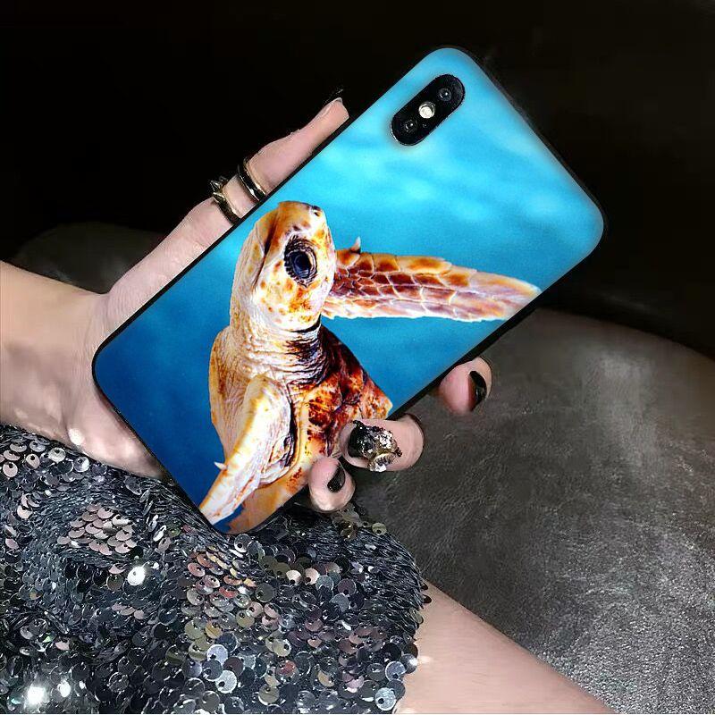 Animal sea turtle