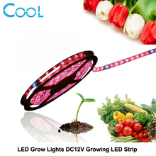 Grow Lights LED Strip DC12V Red Blue Growing LED Strip 5050 for Greenhouse Hydroponic Plant 5m/lot(China)