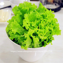 200 Italian Lettuce Seeds good taste,romaine lettuce seeds,easy to grow,delicious salad choice,DIY Home vegetable seeds(China)