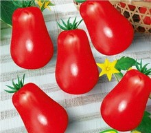 Free shipping red Luo tomatoes, tomato seeds, organic tomatoes - 50 Seed particles