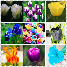 200pcs/bag Tulip Seeds Potted Plants flower seeds,bonsai seeds for sale home garden
