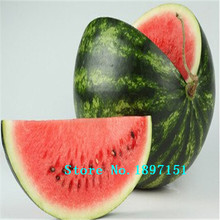Big sale New Cheap Hot Sell 30 Pcs 5Kinds Very Sweet Watermelon Seed Fruit Seeds Yellow Red Blue White Green Rare Vegetable bons