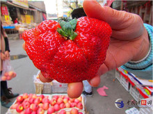 Top Sale ! Very Easy 2017 New Seeds 50pcs Super Big Strawberry Seed,garden Supply, Perfume Bonsai,ghd,home & Garden,home Decor