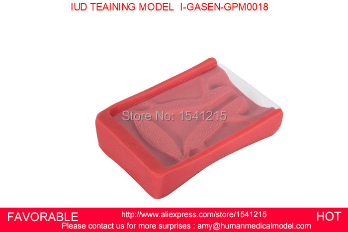 IUD TRAINING SIMULATOR, INTRAUTERINE CONTRACEPTIVE DEVICE TRAINING MODEL, IUD MODEL, BIRTH CONTROL MODEL-GASEN-GPM0018<br>