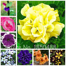 Promotion! Balcony Potted Rare Colorful Petunia Flower Seeds Flowering Plants Rare for DIY Home Garden 200 Particles / lot